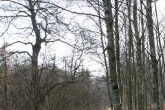 2008_02_03_09