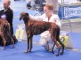 European Dog Show 2008