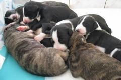 puppies_14_01