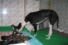 puppies_14_08
