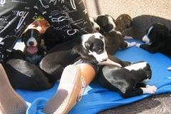 puppies_3tyg_02