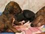 puppies_born_c_28-03-2016